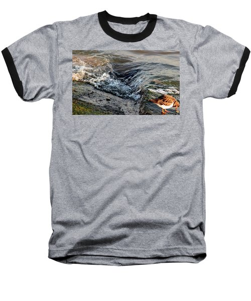 Turnstone By The Water Baseball T-Shirt