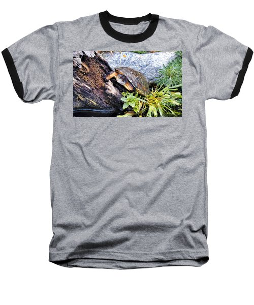 Baseball T-Shirt featuring the photograph Turtle 1 by Dawn Eshelman