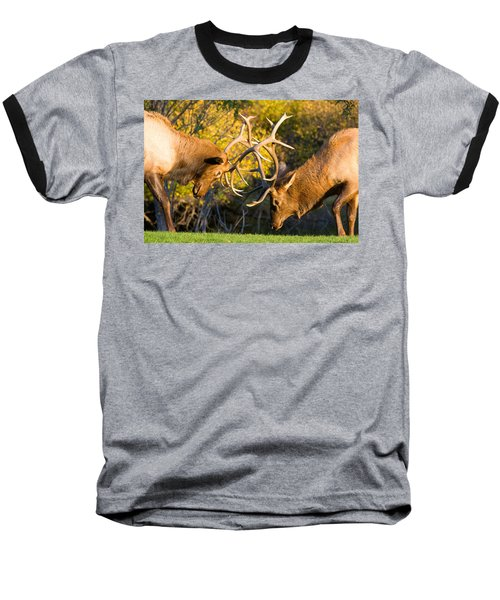 Two Elk Bulls Sparring Baseball T-Shirt