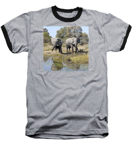 Baseball T-Shirt featuring the photograph Two Male Elephants Okavango Delta by Liz Leyden