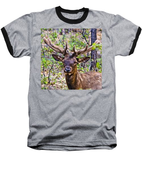 Baseball T-Shirt featuring the photograph Up Close And Personal With An Elk by Bob and Nadine Johnston