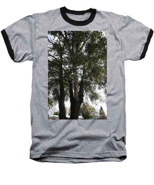 Up-view Of Oak Tree Baseball T-Shirt