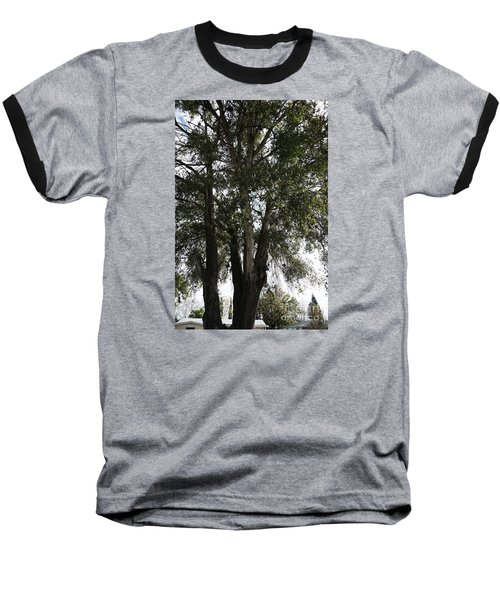 Up-view Of Oak Tree Baseball T-Shirt