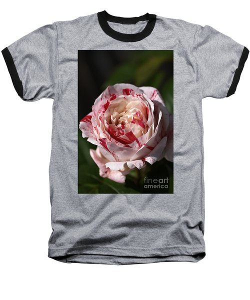 Baseball T-Shirt featuring the photograph Variegated Rose by Joy Watson