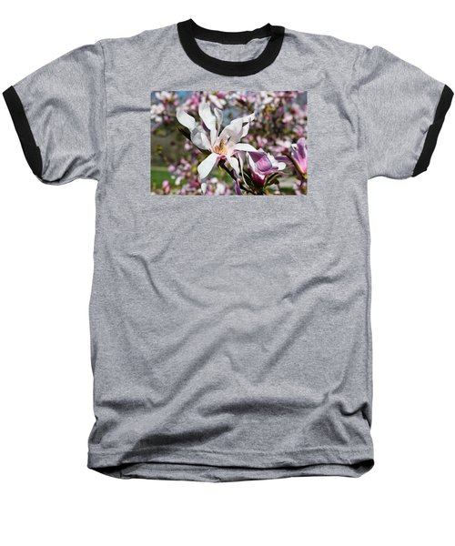 Baseball T-Shirt featuring the photograph Velvet by Julie Andel