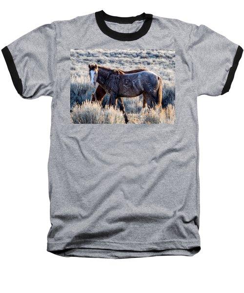 Velvet - Young Colt In Sand Wash Basin Baseball T-Shirt by Nadja Rider