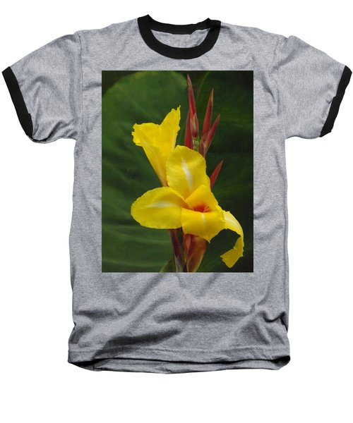 Velvety Yellow Iris  Baseball T-Shirt by Brenda Brown