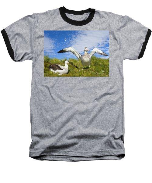 Wandering Albatross Courting  Baseball T-Shirt by Yva Momatiuk John Eastcott