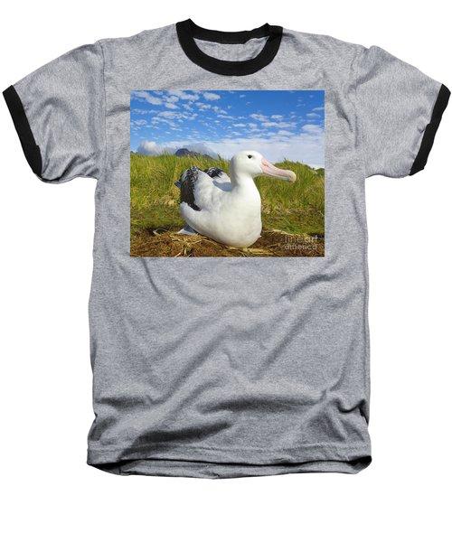 Wandering Albatross Incubating  Baseball T-Shirt by Yva Momatiuk John Eastcott