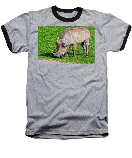Warthog In Addo Elephant Park Near Port Elizabeth-south Africa  Baseball T-Shirt