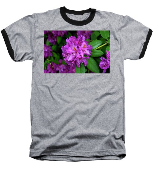Washington Coastal Rhododendron Baseball T-Shirt by Ed  Riche