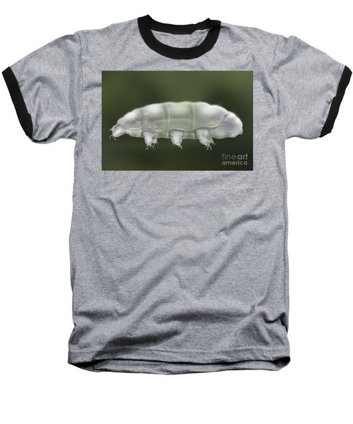 Water Bear Tardigrada - Waterbear Tardigrade  - Scientific Illustration Baseball T-Shirt