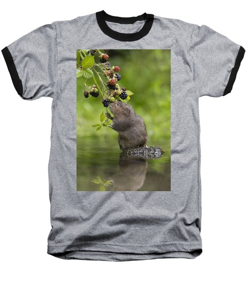Water Vole Eating Blackberries Kent Uk Baseball T-Shirt