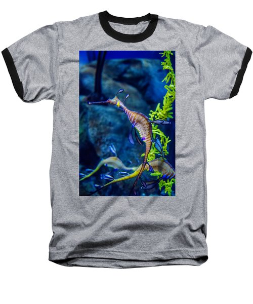 Weedy Seadragon Baseball T-Shirt