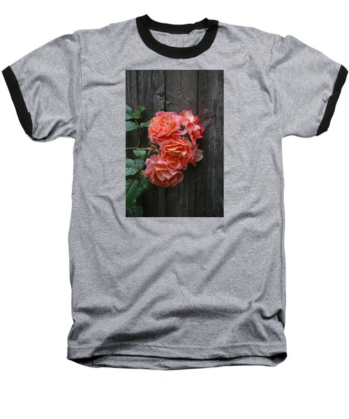 Westerland Rose Wood Fence Baseball T-Shirt by Tom Wurl