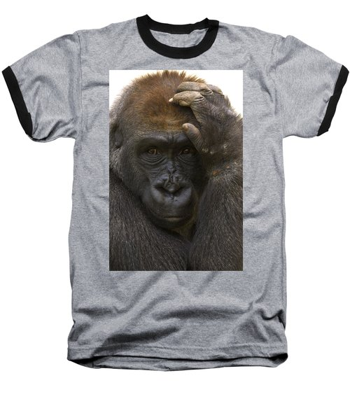 Western Lowland Gorilla With Hand Baseball T-Shirt by San Diego Zoo