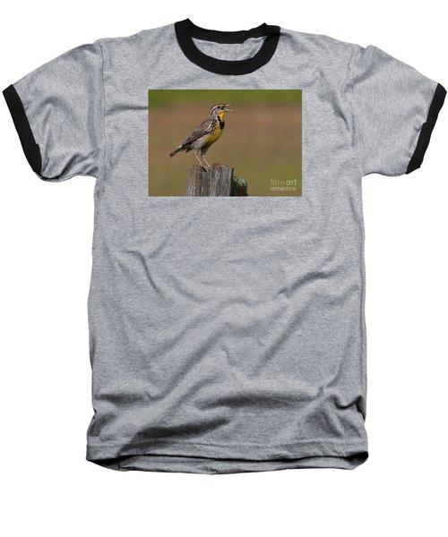 Western Meadowlark.. Baseball T-Shirt by Nina Stavlund