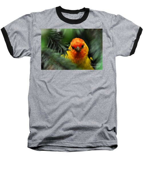 Baseball T-Shirt featuring the photograph Western Tanager by Sam Rosen