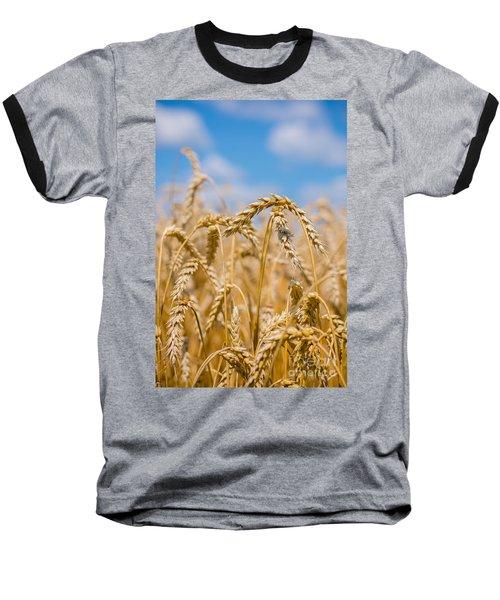 Wheat Baseball T-Shirt by Cheryl Baxter