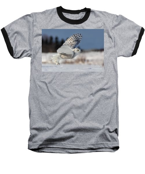 White Angel - Snowy Owl In Flight Baseball T-Shirt by Mircea Costina Photography