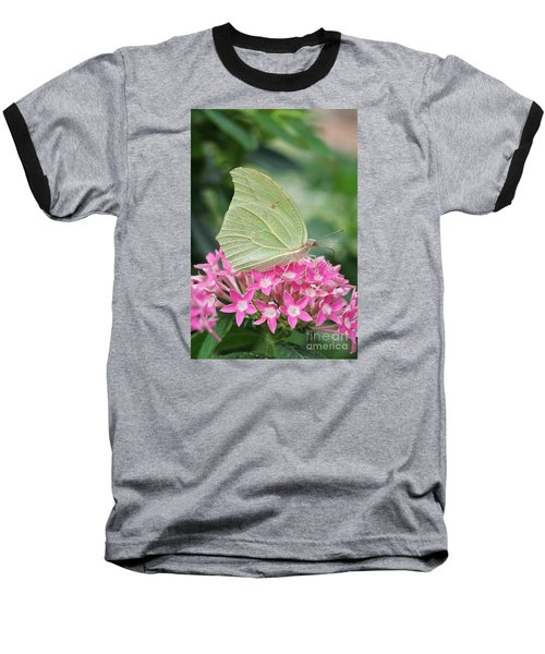 Baseball T-Shirt featuring the photograph White Angled Sulphur by Judy Whitton