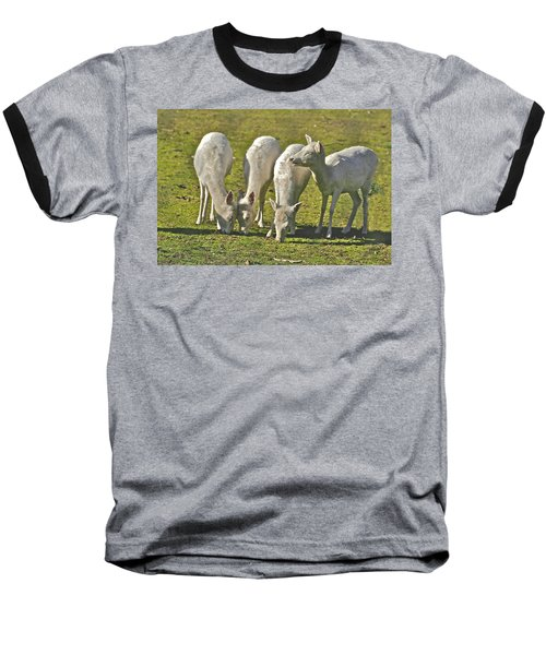 White Fallow Deer Mt Madonna County Park Baseball T-Shirt