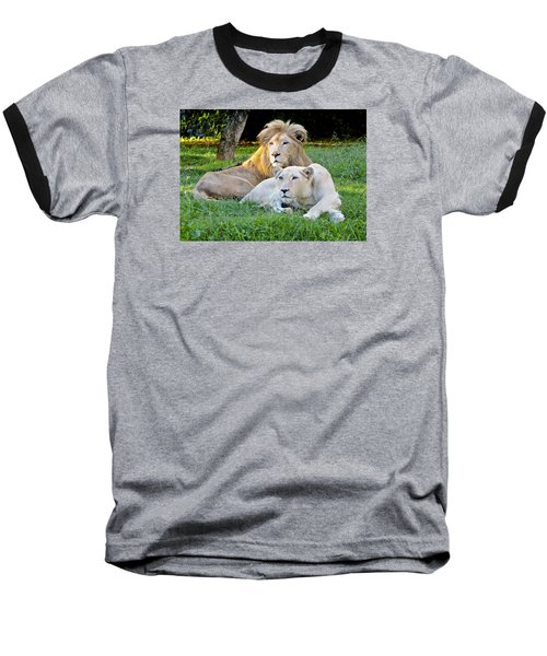 White Lion And Lioness Baseball T-Shirt by Venetia Featherstone-Witty