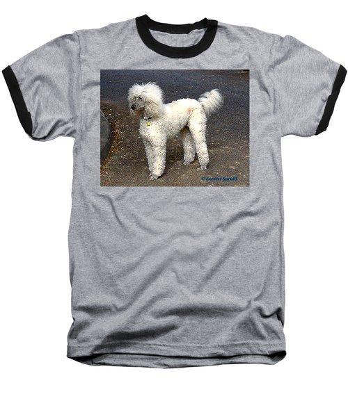White Poodle Baseball T-Shirt