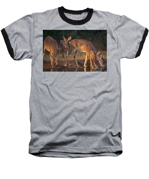 Whitetail Deer At Waterhole Texas Baseball T-Shirt by Dave Welling