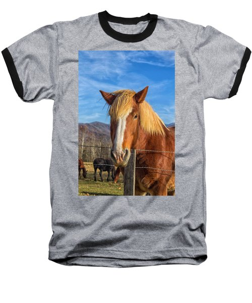 Wild Horse At Cades Cove In The Great Smoky Mountains National Park Baseball T-Shirt