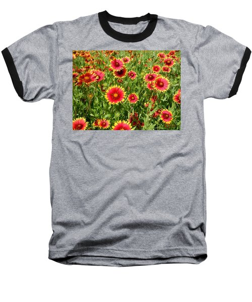 Baseball T-Shirt featuring the photograph Wild Red Daisies #4 by Robert ONeil