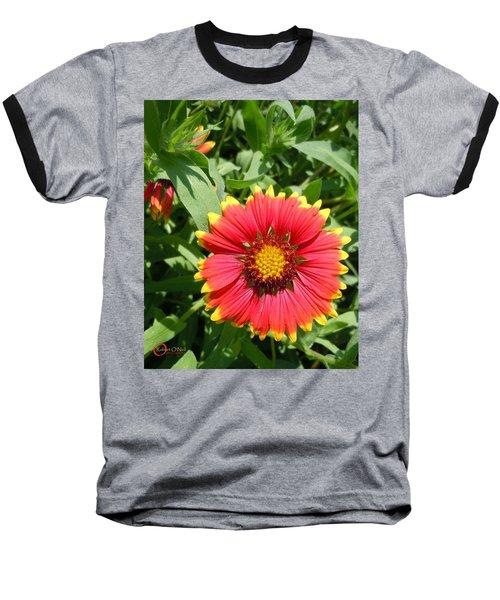 Baseball T-Shirt featuring the photograph Wild Red Daisy #2 by Robert ONeil