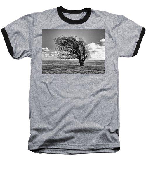 Windswept Tree On Knapp Hill Baseball T-Shirt