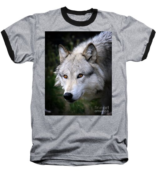 Baseball T-Shirt featuring the photograph Wolf Stare by Steve McKinzie