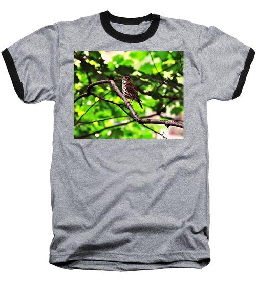 Wood Thrush Singing Baseball T-Shirt by Chris Flees