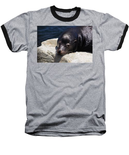 Wounded Sea Lion Resting Baseball T-Shirt