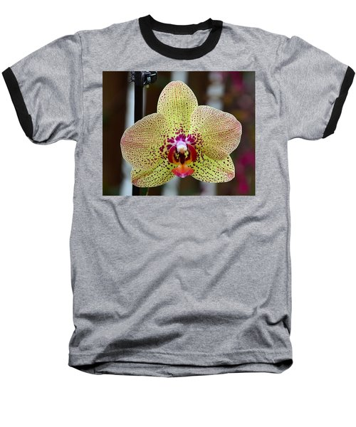 Yellow And Maroon Orchid Baseball T-Shirt by Kathy Eickenberg
