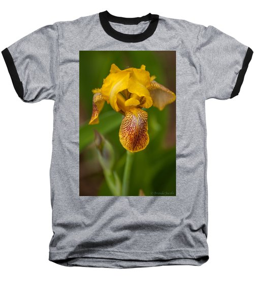 Yellow Bearded Iris Baseball T-Shirt by Brenda Jacobs