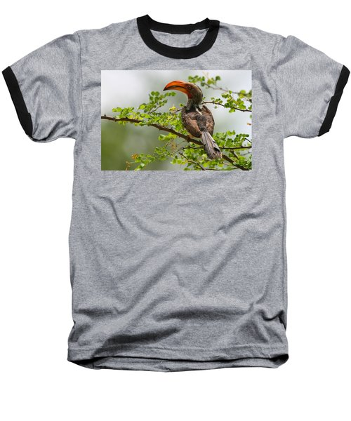 Yellow-billed Hornbill Baseball T-Shirt