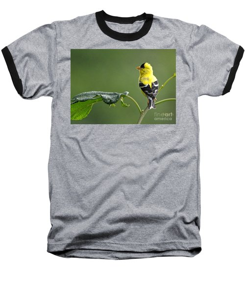 Baseball T-Shirt featuring the photograph Yellow Finch by Nava Thompson
