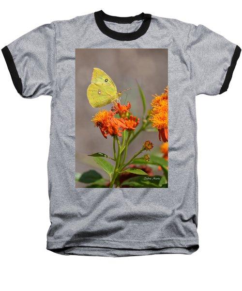 Yellow Sulphur Butterfly Baseball T-Shirt by Debra Martz