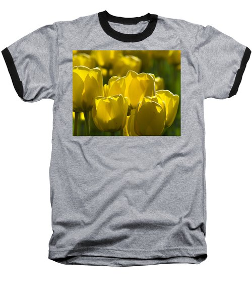 Yellow Tulips  Baseball T-Shirt