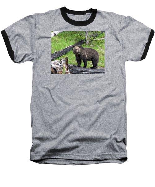 Yellowstone Grizzlies 2 Baseball T-Shirt by George Jones