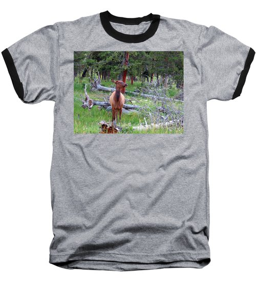 Yellowstone Moments. Doe Baseball T-Shirt