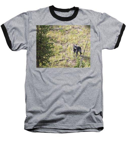 Baseball T-Shirt featuring the photograph Yellowstone Wolf by Belinda Greb