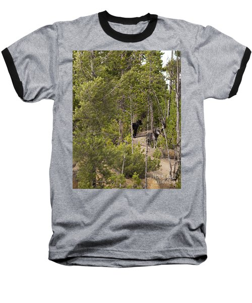 Baseball T-Shirt featuring the photograph Yellowstone Wolves by Belinda Greb