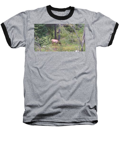 Baseball T-Shirt featuring the photograph Young Elk Grazing by Fortunate Findings Shirley Dickerson