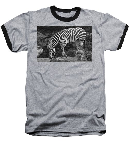 Baseball T-Shirt featuring the photograph Zebra In Black And White by Kate Brown