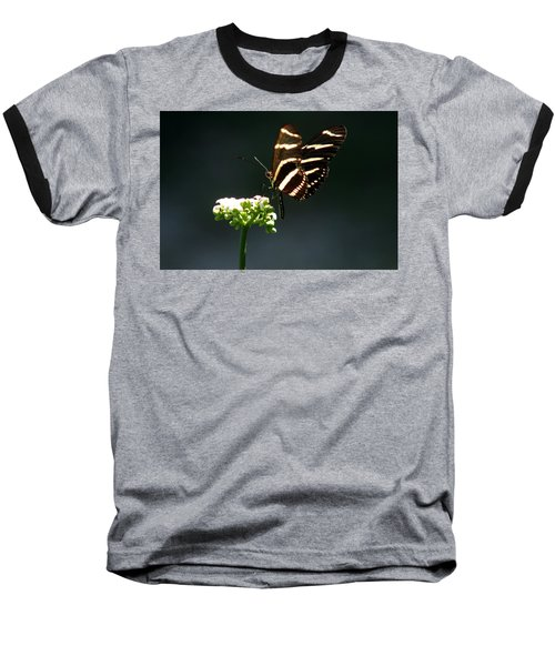 Zebra Longwing Baseball T-Shirt by Greg Allore