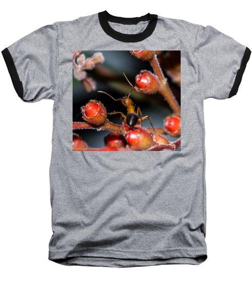 Curious Ant Baseball T-Shirt by Shannon Harrington